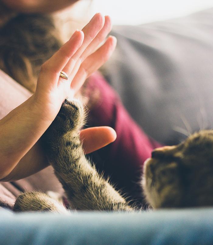 私と猫の700日間 ―前編―